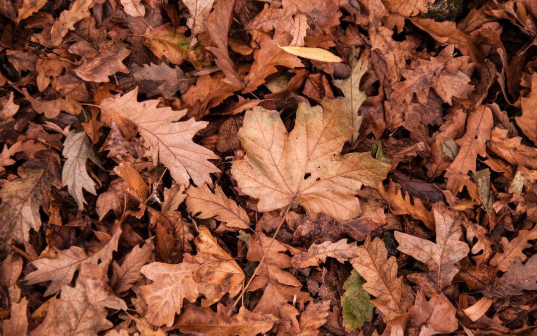Fall Interior Design Updates for Your Home